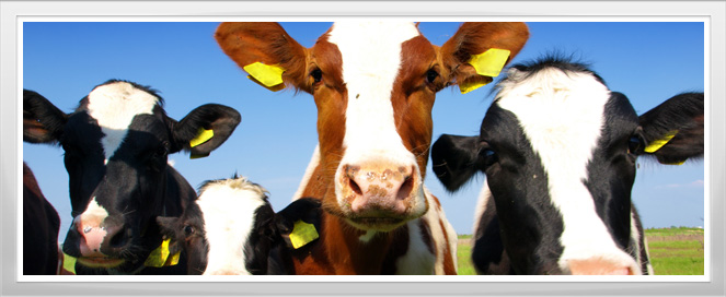 Cattle Management Agriculture Training Program